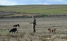 Los cazadores afrontan la General con altas expectativas en perdices, tras una buena cría