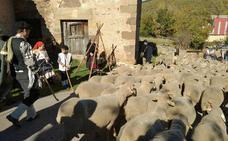 Tolbaños de Arriba retrodece décadas para 'despedir' a sus pastores este sábado