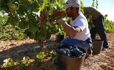 El 80 % de la vendimia en Ribera del Duero se realizó a mano