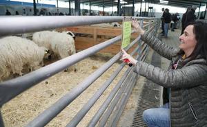 La raza churra lanza en Palencia un mensaje de socorro para ganar atractivo en el mercado