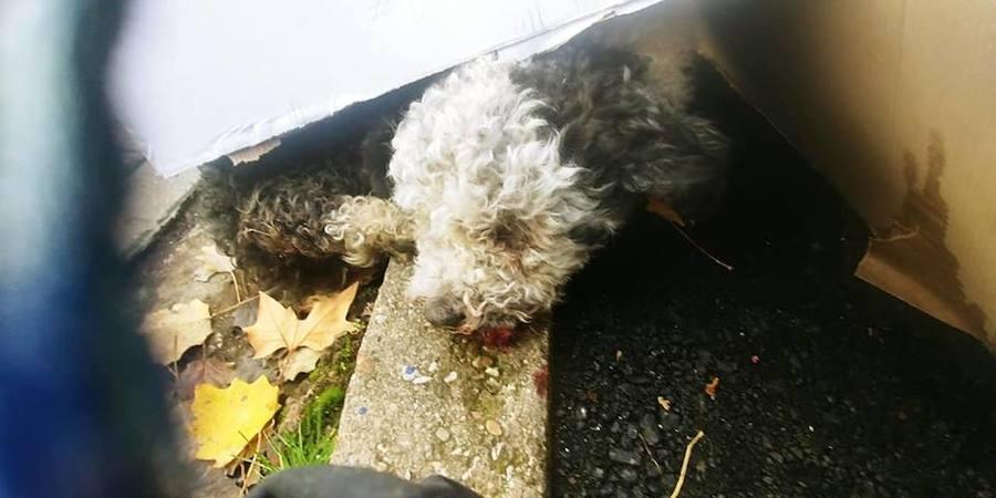 Investigan si alguien lanzó a un perro a las vías del tren desde un puente en Palencia