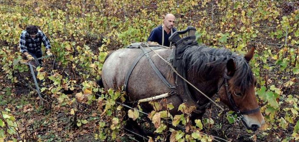 La agricultura pierde fuelle en la creación de empleo mientras la construcción se rearma
