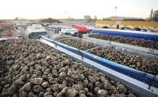 Los remolacheros de UCCL acuerdan no sembrar al precio ofertado por Azucarera- British Sugar