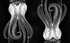 De cuando los extranjeros se aventuraron a comer calamares en su tinta