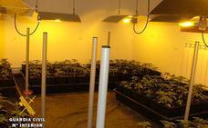 La Guardia Civil desmantela un laboratorio con 998 plantas de marihuana en Las Merindades