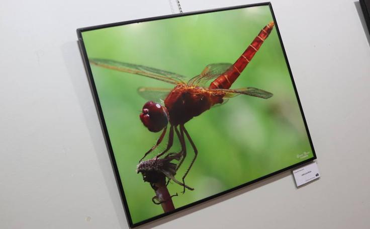 Las mejores imágenes de la exposición 'Doce puntos de vista'