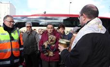 En imágenes, la bendición de los animales de San Antón