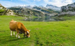 Los lácteos estrenan etiquetado con el país de origen