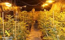 La Guardia Civil desmantela un laboratorio 'indoor' con 318 plantas de marihuana