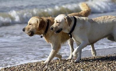 Un 'Airbnb para perros' como alternativa a las residencias