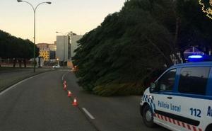 La caída de un árbol obliga a cortar un carril en la Avenida Castilla y León