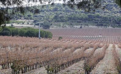 El Protocolo de Oporto busca apoyo de las bodegas de la DO Ribera del Duero contra el cambio climático