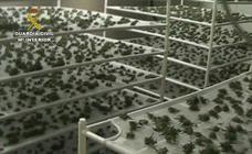 Operación contra el tráfico de marihuana