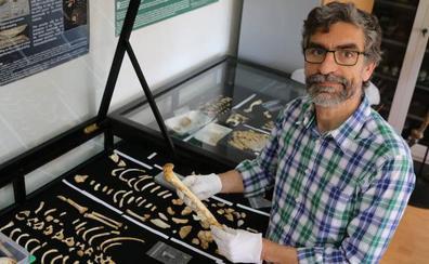 El sueño vivo de encontrar el último antepasado común con el chimpancé