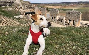 Pipper, el perro influencer, llega a Burgos