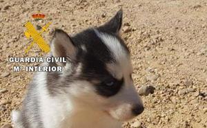 La Guardia Civil detiene a una joven por estafa on line en la compraventa de un perro