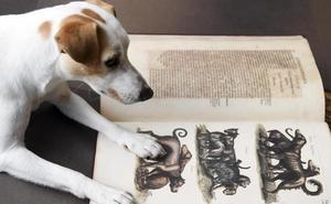 Pipper, el famoso perro turista, conoce los museos del Libro y del Cid en Burgos