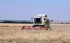 107 jóvenes de Burgos piden ayuda a la Junta para trabajar por primera vez en el sector agrícola