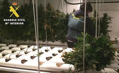 La Guardia Civil aprehende 625 plantas de cannabis y 445 gramos de cogollos secos en una adosado del alfoz de Burgos