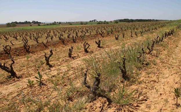 Sotillo de la Ribera vivirá su II Feria del Vino el 9 de Junio