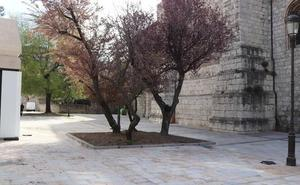La Junta Electoral rechaza el recurso del PSOE que pedía sancionar a Lacalle por visitar las obras de San Lesmes