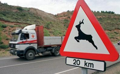 Reclaman a la Junta que ponga coto a la fauna salvaje que daña el campo y ocasiona accidentes de tráfico