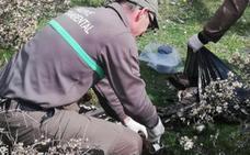 Un vecino de Huerta de Arriba halla un buitre negro muerto, especie amenazada