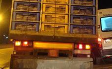 Sorprenden a un transportista de animales vivos llevando 8.000 kilos más de los autorizados