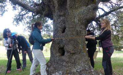 La Ruta del Vino Ribera del Duero incluirá en su oferta turística los 50 árboles más singulares
