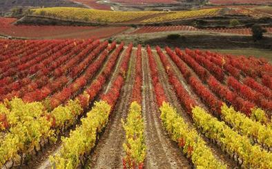 Menos cebada en el norte y más quinoa en el sur con el cambio climático