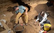 Un estudio, en el que ha participado el CENIEH, desvela que la dieta del oso de las cavernas contemplaba la carne