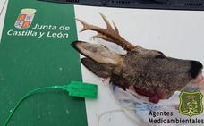 Los Agentes Medioambientales denuncian a dos cazadores este fin de semana en Burgos