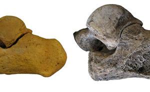 Un investigador del CENIEH, coautor de un estudio que permite conocer el sexo de los fósiles de Homo Sapiens