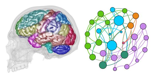 Un investigador del CENIEH lidera un trabajo en el que aplica el análisis de redes al estudio de la macroanatomía cerebral