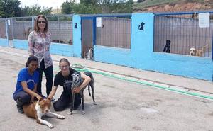 En Burgos se abandonan más de 700 animales al año «sin ninguna consecuencia legal»