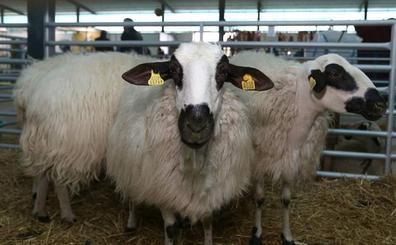 Los seguros ganaderos crecieron sólo un 2,5% en el último año pero incluyeron casi dos millones de animales más