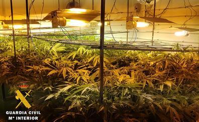 Dos detenidos en el desmantelamiento de un laboratorio 'indoor' con 120 plantas de marihuana del Alfoz de Burgos