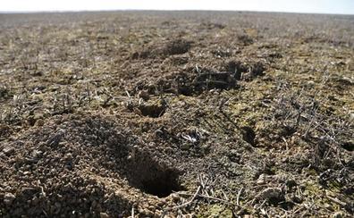 COAG valora la celeridad de la Junta en laboreo contra la plaga de topillos