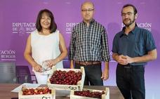 Las heladas reducen a más de la mitad la producción de cereza en el Valle de Caderechas