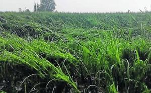 El pedrisco y la sequía afectan a más de 645.000 hectáreas en la región