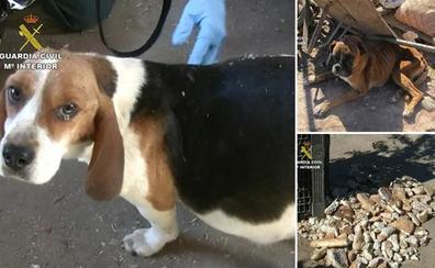 Ayuntamiento y Junta han hecho «oídos sordos» al maltrato de perros en el criadero de Melgar