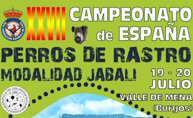 El Valle de Mena acoge este sábado el XXVII Campeonato de España de Perros de Rastro sobre jabalí