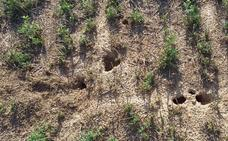Fomento, ADIF y la CHD ayudarán en la lucha contra los topillos