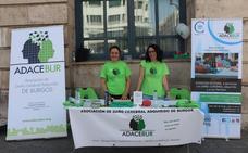 Adacebur sale a la calle a celebrar el Día Mundial del Cerebro