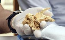Balance de la campaña de excavaciones Atapuerca 2019