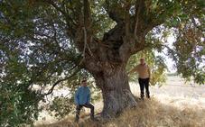 La Diputación elaborará un modelo de ordenanza municipal para la protección de los árboles singulares de Burgos