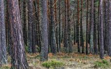 Los montes de Canicosa y Palacios servirán de terapia contra el estrés gracias a los baños de bosque