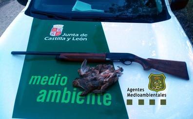 Sorprenden en la Ribera a un cazador sin licencia en vigor