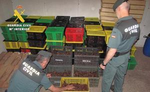 La Guardia Civil aprehende 718 Kg de cangrejo rojo en un polígono de Burgos