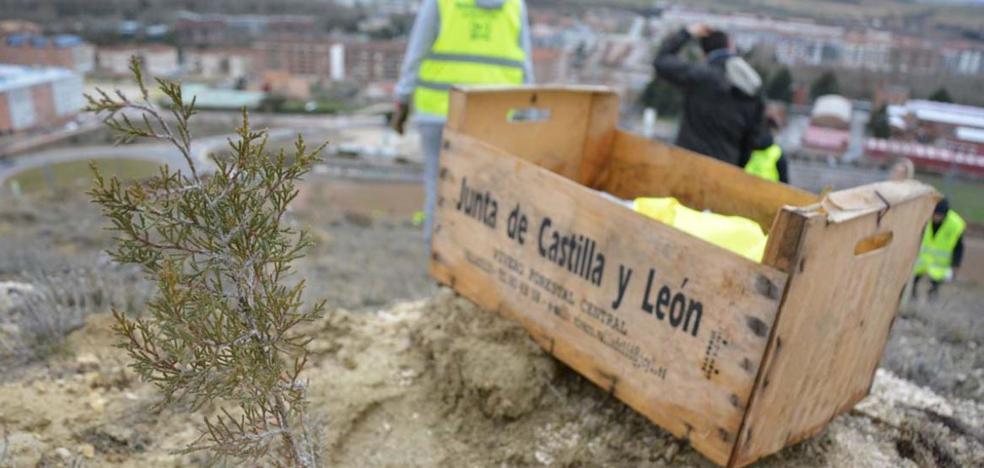 Castilla y León cuenta con más de 900.000 hectáreas forestales ordenadas, el doble que en 2005